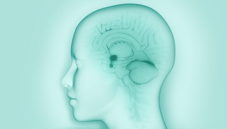 blog-dr.daniel-leal-neurobiologia-apetite-hipotalamo